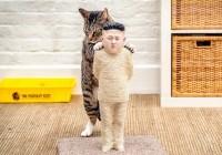 Breaking News : La Corée du Nord censure les vidéos avec des chatons